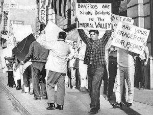 Protestors oppose the use of braceros in California's Imperial Valley lettuce harvest, 1961. California State University San Marcos.