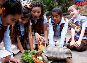 "Girl Scouts make ""cookie"" for Tank the tortoise"